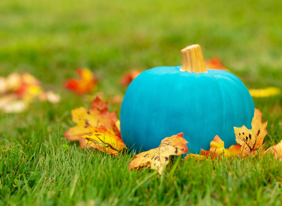 Curious about teal pumpkins? They're for an allergy-free Halloween.